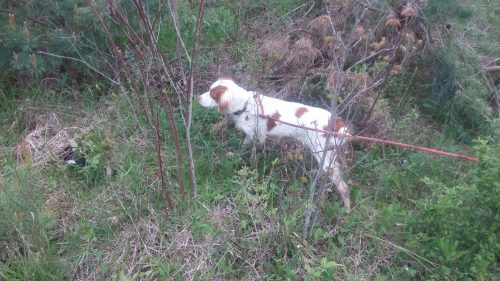Top Hunting Dogs