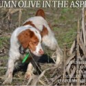 Aspen Brittanys - Started dogs & puppies - Exellent hunting and conformation bloodlines!