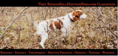 Buy and Sell Hunting Dogs | Gun Dogs for Sale and Hunting Dog Training