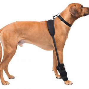 Large Carpal Pet Therapy Wrap with Therapy Gel