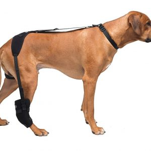 Large Tarsal Pet Therapy Wrap with Therapy Gel