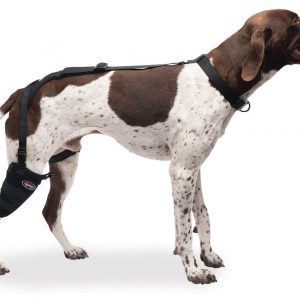 Medium Short Stifle Pet Therapy Wrap with Therapy Gel