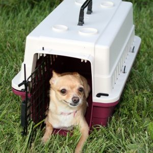 Protective Carrier Crate Small