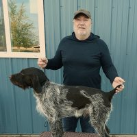 Proven Wirehaired Pointing Griffon available for stud