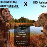 GRHRCH UH 4xGMPR 3 Ring Tycho's Supernova of TGK MH (1 Master National pass) X HRCH Huntmaster KH Sadie