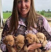 Farm Raised AKC and CKC Registered Labrador Retrievers.  Both parents on site OFA Certified.