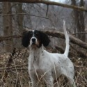 OBEDIENT FAMILY HUNTING SETTER